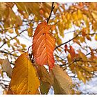 Autumn Leaves by AmandaJanePhoto