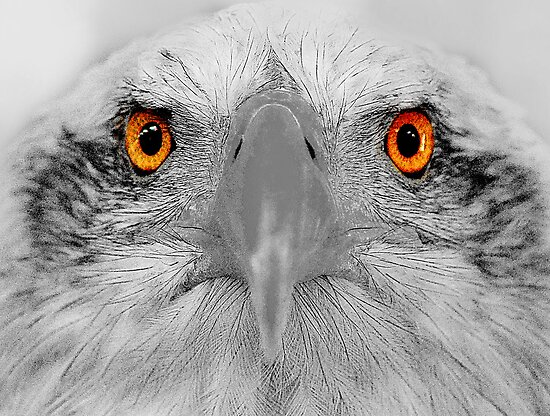 Look into my eyes, not around the eyes but in the eyes. by Anthony Hedger Photography