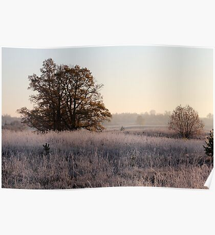 First frost, and tree in autumn colors Poster