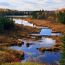 """""""  Autumn Marsh - 2  """" by fortner"""