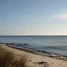 Calm sea by kostolany244