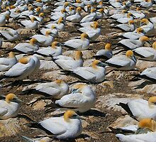Birds of a feather by John Dalkin