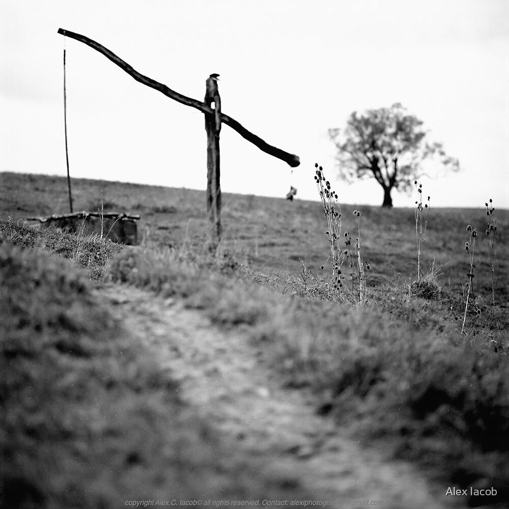 The Way by Alex Iacob