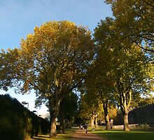 Autumn, Bute Park by Artberry