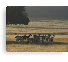 Dawn in Richmond Park, London Canvas Print
