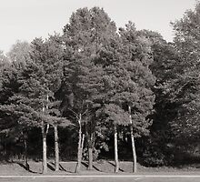 Trees, Bute Park by Artberry