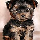 Yorkshire Terrier Puppy by ellenspaintings