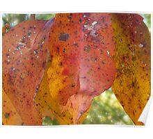 Fall in South Carolina Poster