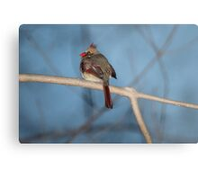 Female Cardinal at Dusk Metal Print