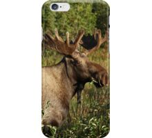 i Moose iPhone Case/Skin