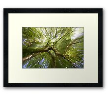 Glastonbury Sunlight Framed Print