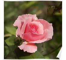 Queen Elizabeth Pink Poster