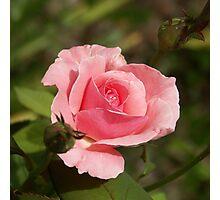 Queen Elizabeth Pink Photographic Print