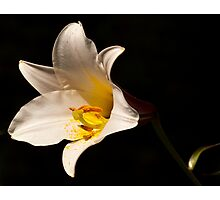 Lone Lily Photographic Print