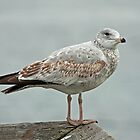 Who&#x27;s a pretty gull, then? by Mike Oxley