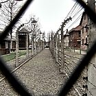 Fenced in by Wintermute69