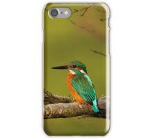 Kingfisher iPhone Case iPhone Case/Skin