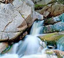 Nature in Motion by Photoguy350