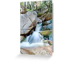 Nature in Motion Greeting Card