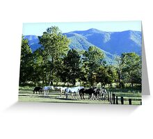 Mountain Horses Greeting Card