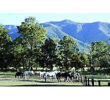 Mountain Horses Photographic Print