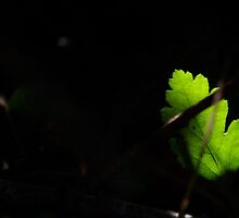 Green Lit in the Darkness by Wealie