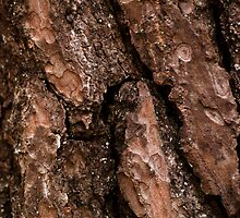 Red Bark Detail by Wealie