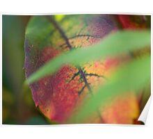 Multicoloured Leaf Poster