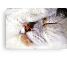 Fur Ball Canvas Print