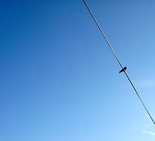 Bird on a wire by joegardner