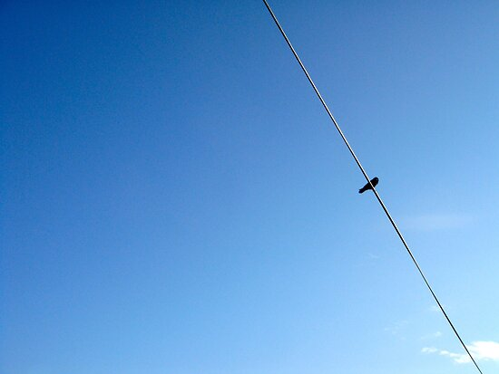 Bird on a wire by joegardner