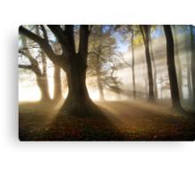 Misty Autumn Woods, Cotswolds, England Canvas Print