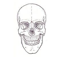 Human Skull, adult male Photographic Print