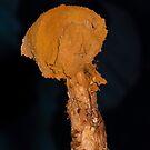 Sandy Siltball ( Battarraea Phalloides ) by SWEEPER