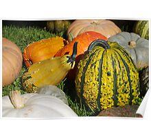 Pumpkin patch 1 Poster