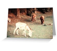 Donkeys in a Field Greeting Card