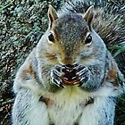 iPhone Case - My Squirrel Friend by Eileen Brymer