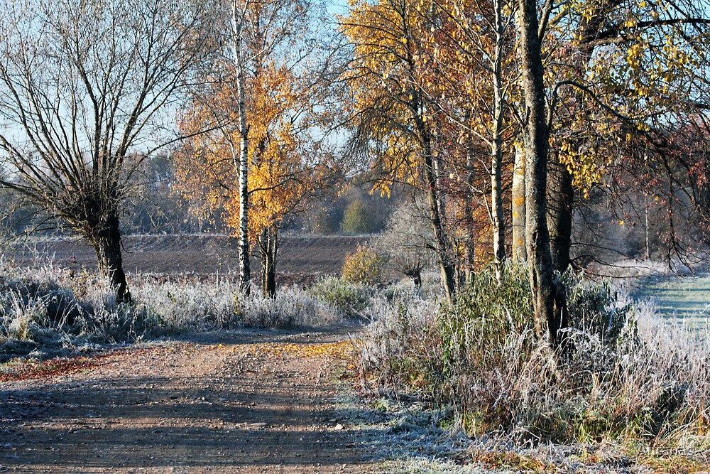First frost in rural pathway 2 by Antanas