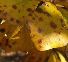 Fall Leaves Series by Karen L Ramsey