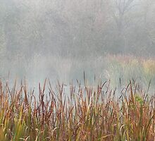 Foggy Reeds by bannercgtl10