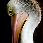 Australian Pelican in Profile by Steve Munro