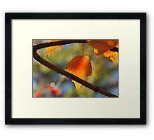 Life Flies! Framed Print