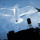 Bird's Flight by Misha Dontsov