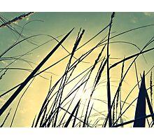 Plant 4 Photographic Print