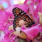 Butterfly on tree by loiteke