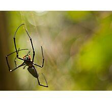 Orb Spider Photographic Print
