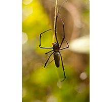 Orb Spider Photographic Print