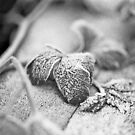 Frozen In Parsley by rorycobbe