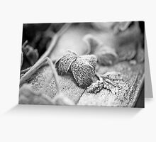 Frozen In Parsley Greeting Card
