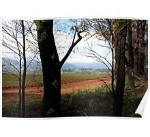 Post February 2009 Bushfires - near Yarra Glen VIC  Poster